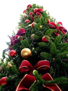 800px-Christmas_tree_sxc_hu