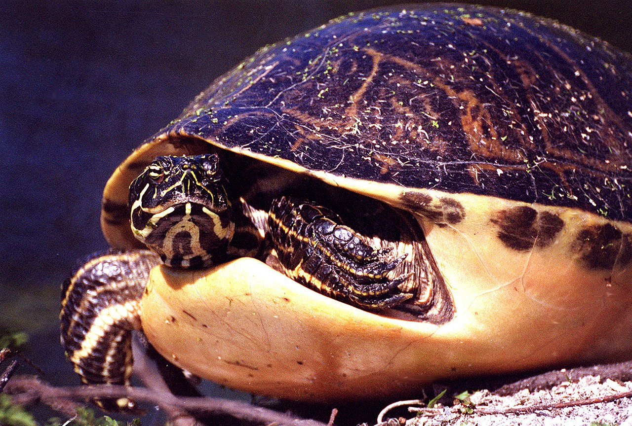 Warning turtles amp tortoises inc - Reader Friday What Creature In The Animal Kingdom Best Describes Your Writing Style